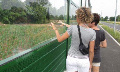 Strage di uccelli lungo le barriere trasparenti della Pedemontana
