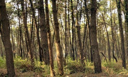 Rosà: arriva il weekend ecologico