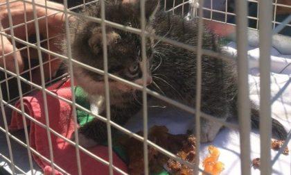 Gattino finisce sotto la griglia della ciclabile: recuperato dai vigili del fuoco