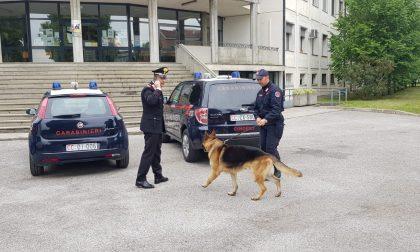 "Controllo antidroga dei Carabinieri all'I.P.S.I.A ""Masotto"" a Noventa Vicentina"
