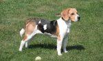 """Non è residente a Costabissara: multa """"insolita"""" perchè porta il cane al parco"""