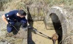 Salvataggio di un pastore tedesco a Bolzano Vicentino