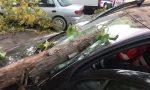 Pioggia, vento e danni nel Vicentino