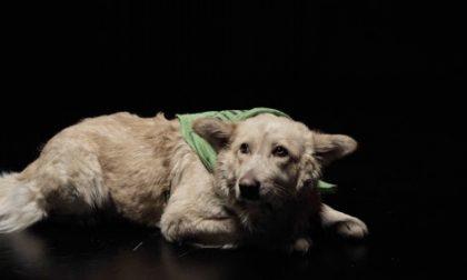 """Il cucciolo orfano salvato dai """"Lost"""""""