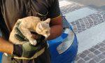 Gattino incastrato nel cofano di un'auto in corsa: lo salvano i pompieri