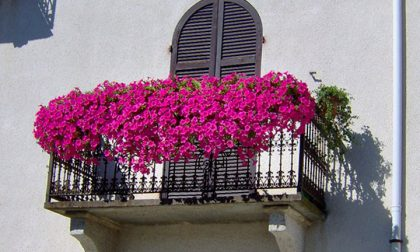 """Concorso """"balconi fioriti e angoli suggestivi"""" a Marostica"""