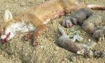 Stagione di caccia al via: protesta degli animalisti in piazza a Milano
