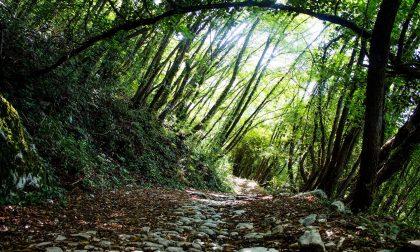 Transumanti, a Crosara di Marostica passeggiata teatrale ed escursione