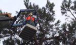 Concluse le indagini sulla stabilità di alcuni cipressi: Un solo albero sarà abbattuto