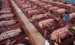 Stop alle gabbie negli allevamenti: superato il milione e mezzo di firme VIDEO