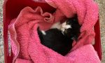 La strana sparizione di un gatto: Affidato e poi scomparso dopo un giorno