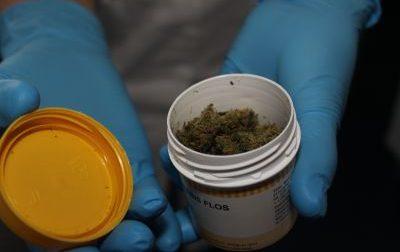 Coltivare cannabis non è reato per la Cassazione