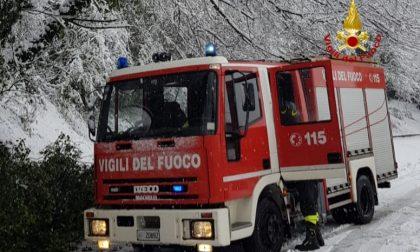Cade un albero e blocca la strada: Rimosso dai vigili del fuoco