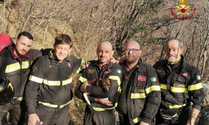 Avventura a lieto fine per Kira, cagnolina di 2 anni caduta nel dirupo