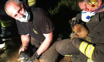 Rischiavano la vita appena nati, cuccioli salvati dai Vigili del fuoco – FOTO
