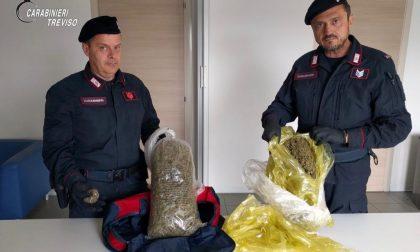 Nei guai una 24enne di Bassano del Grappa: aveva 2,2 chili di marijuana essiccata