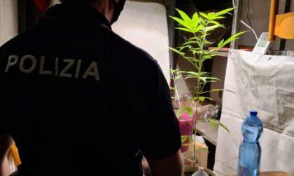Serra di marijuana in cantina: denunciato a Verona 24enne originario di Vicenza