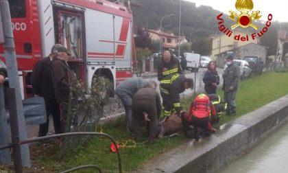 Cervo rischia di annegare a Calvene, salvato dai Vigili del fuoco. Recuperato anche un bassotto a Vicenza – FOTO