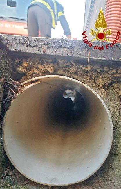 Gattino si infila in un tubo di scolo: salvato dai Vigili del fuoco - FOTO