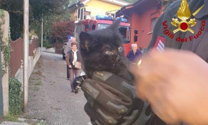 Gattino si infila in un tubo di scolo: salvato dai Vigili del fuoco – FOTO