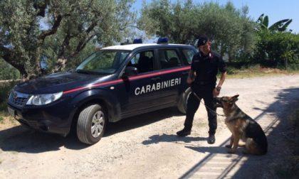 Montecchio Maggiore, denunciato pusher 24enne