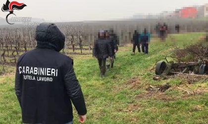 Sfruttamento del lavoro tra Vicenza e Verona: tre arresti – VIDEO
