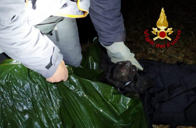 Finisce in un dirupo tra i rovi, Scilla salvata dai Vigili del fuoco: era sparita da una settimana