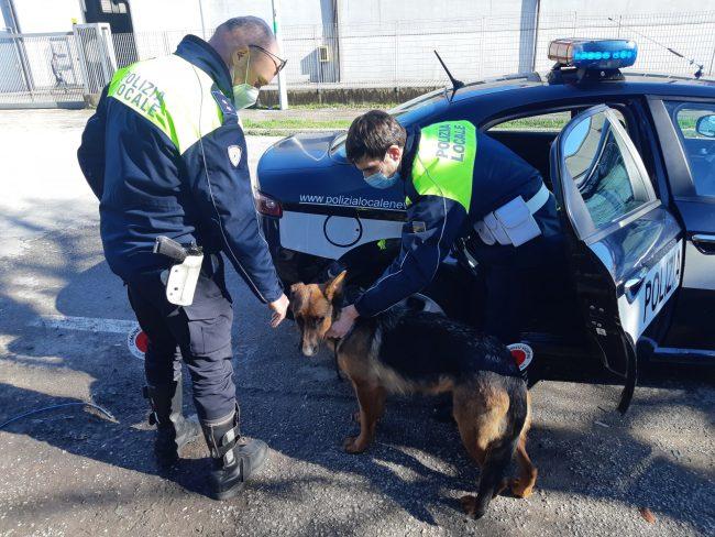 """Pastore tedesco rapito, Kira ha potuto """"riabbracciare"""" il proprietario e i suoi cuccioli"""