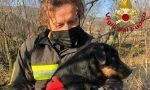 Le foto del salvataggio di Rocky, bracco tedesco caduto nell'alveo del Chiampo