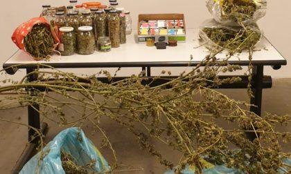 Lite tra conviventi, intervengono i Carabinieri e li arrestano: nascondevano 39 piante di marijuana alte 4 metri