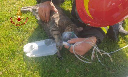 Il video e le foto del gatto rianimato dopo l'incendio a Montebello