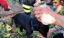 Le commoventi foto dell'incredibile salvataggio del cucciolo Jerry