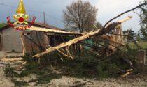 """Le foto del fulmine """"killer"""" che ha devastato un albero, mandato in frantumi i vetri e fatto saltare i tombini"""