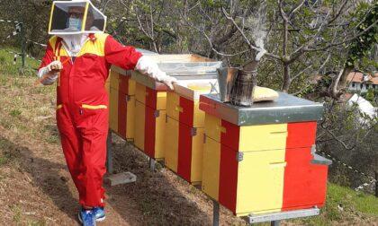 Giornata Mondiale delle api, sabato a Bassano l'inaugurazione dell'apiario didattico