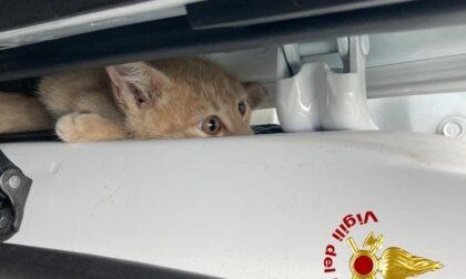 Le incredibili foto del gattino rimasto incastrato tra la porta e il passaruota dell'auto