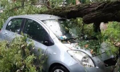 Maltempo a Vicenza, le prime immagini dei danni in città
