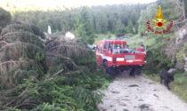 Maltempo sull'Altopiano, il video della devastazione di Malga Granezza