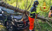Violento nubifragio: le foto dell'albero crollato su un'auto ad Asiago