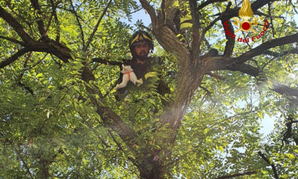 Gattino bloccato su un albero recuperato dai pompieri a Gambellara
