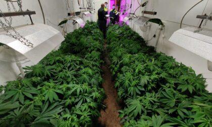 Sembrava un capannone abbandonato ma all'interno c'erano centinaia di piante di Marijuana